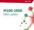 M100-1000 DNA Ladder