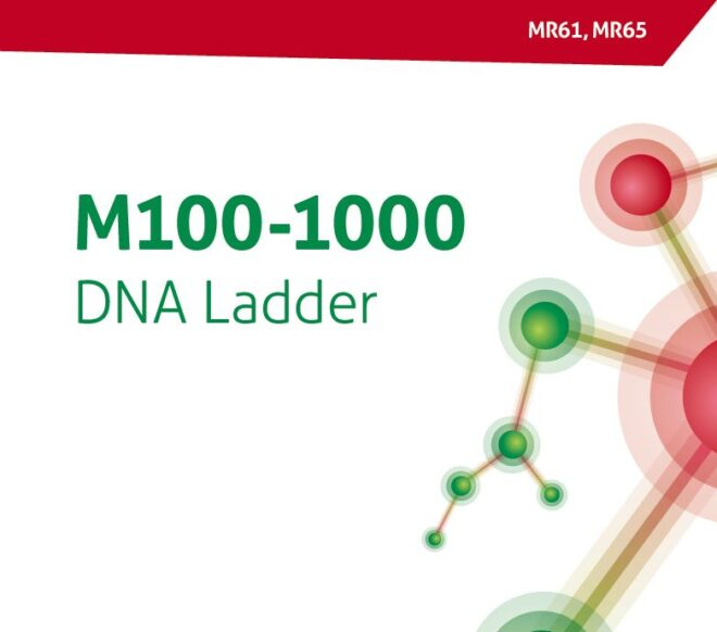 M100-1000 DNA Ladder