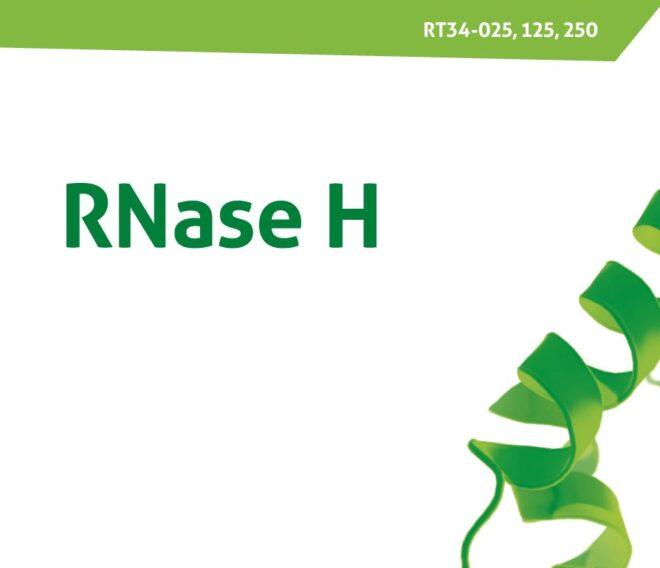 RNase H