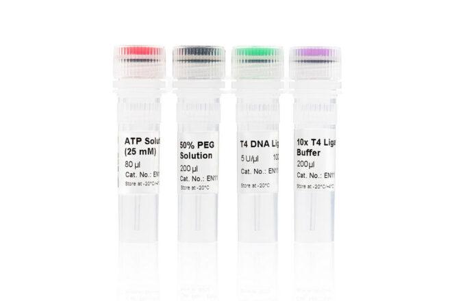 T4 DNA Ligase EN11